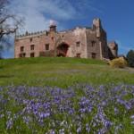 bluebells&castle